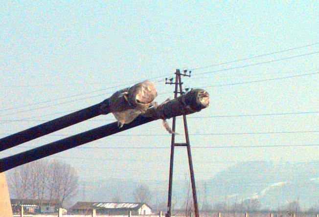 ZSU-57-2 barrels